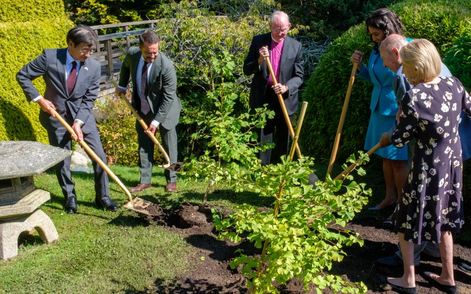 Slideshow: Two Hiroshima Survivor Trees Planted in Japanese Tea Garden