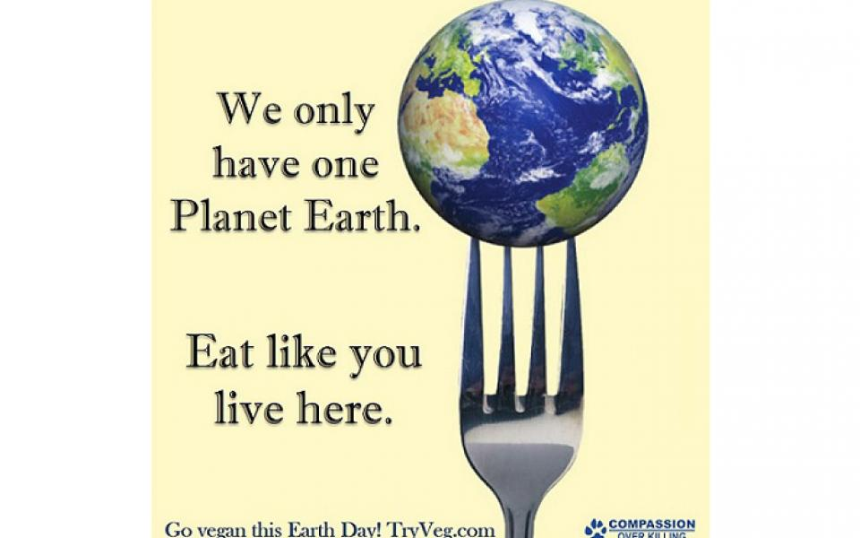 What You Can Do for Earth Day